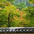 Photos: 宝厳院の色付き