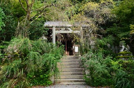 大豊神社の萩
