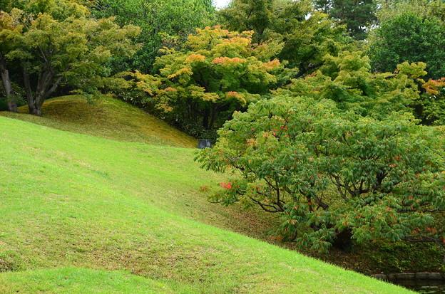 少し色づいた朱雀の庭