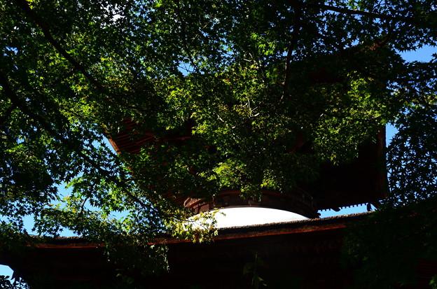 緑の中の多宝塔