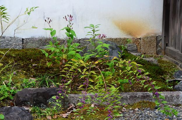 杜鵑とコムラサキ