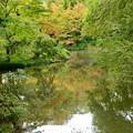 写真: 色づき始めた植物園
