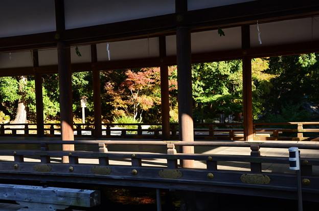 上賀茂神社の色づき