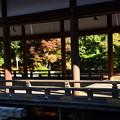 写真: 上賀茂神社の色づき