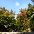 Photos: 三千院前の色付き