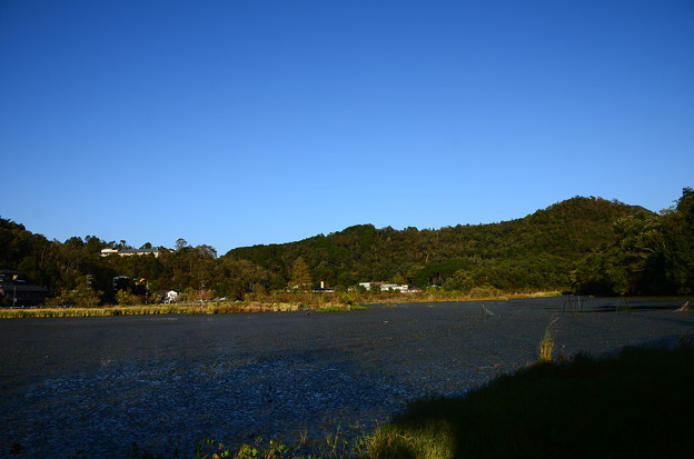 秋の深泥池