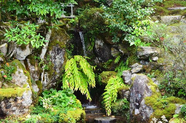 契心園の滝