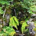 写真: 契心園の滝