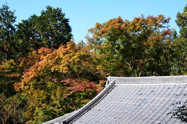 大屋根と紅葉