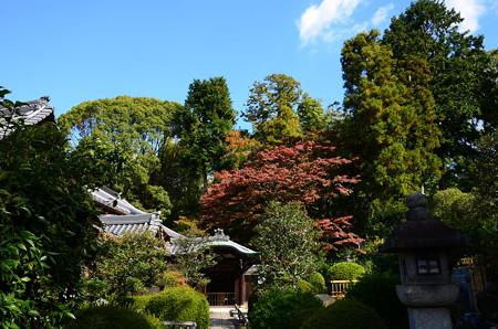 栄攝院の秋景色