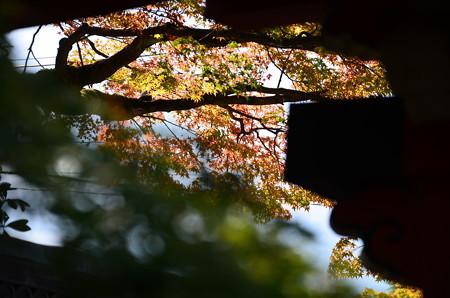 隙間から覗く紅葉