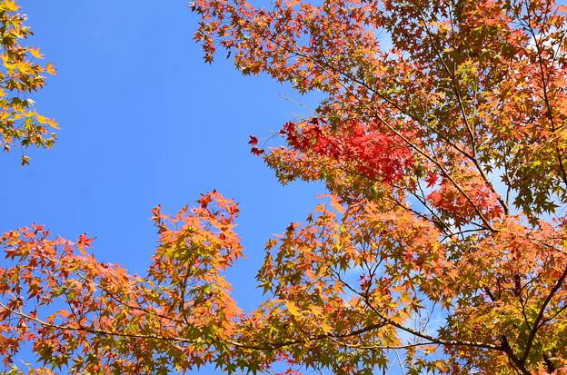 秋空を染めて