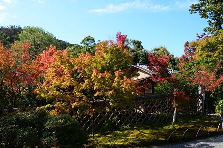 光悦垣と紅葉