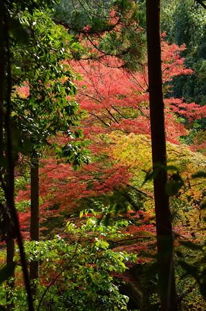 紙屋川の紅葉