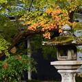 Photos: 秋の彩り