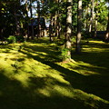 大徳寺の苔庭