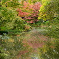 Photos: 京都府立植物園の色づき