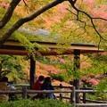 Photos: 染まりゆく京都府立植物園
