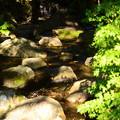 Photos: 小さな滝