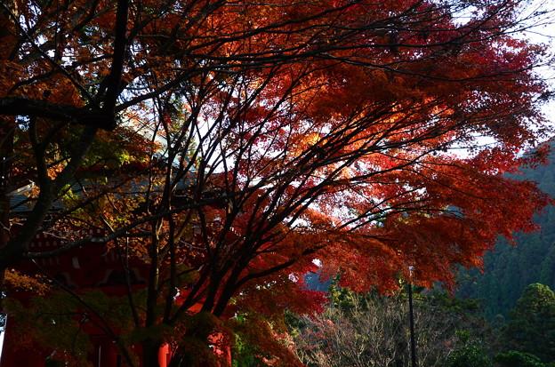 鐘楼脇の紅葉