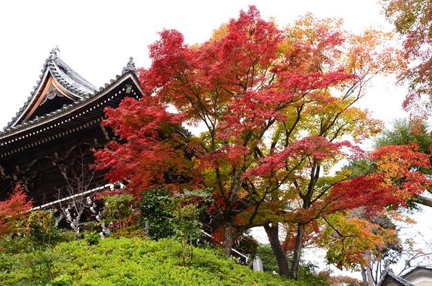 山門脇の紅葉