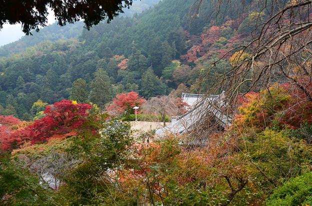 善峯寺の紅葉景色