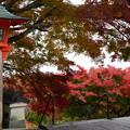 写真: 釈迦堂への石段を登って
