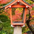 写真: 紅葉灯篭~