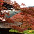 写真: 多宝塔と紅葉
