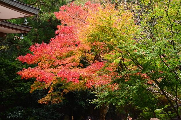 霊宝殿前の紅葉