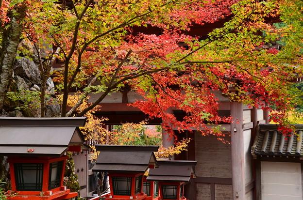 山門前の紅葉