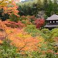 写真: 紅葉の中の銀閣
