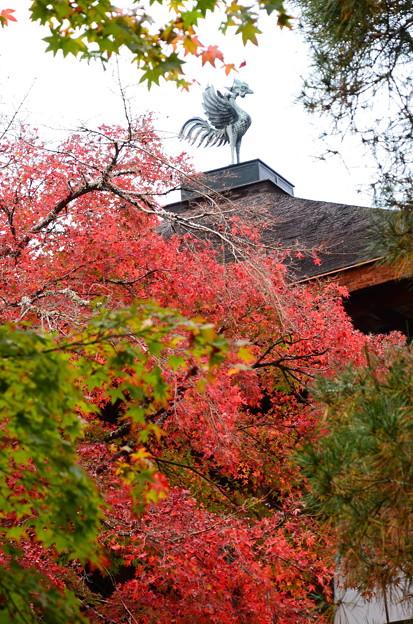 紅葉と鳳凰