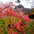 Photos: 紅葉と鳳凰