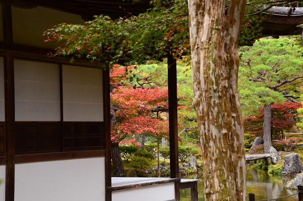銀閣寺の紅葉景色