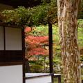 写真: 銀閣寺の紅葉景色