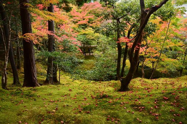 紅葉と散りもみじ