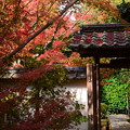 紅葉の金福寺