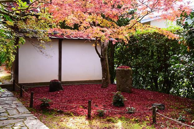 金福寺の散り紅葉
