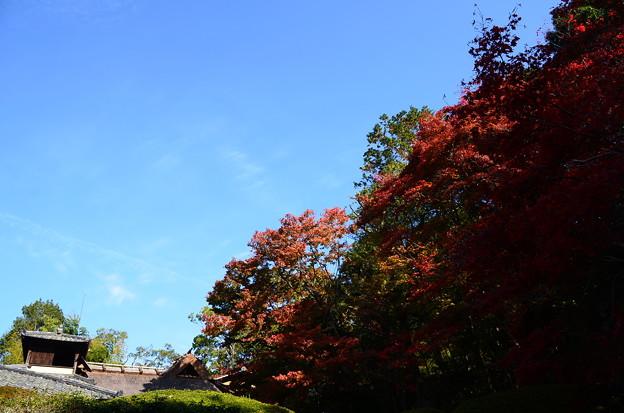 紅葉と嘯月楼
