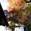 Photos: 白壁と紅葉