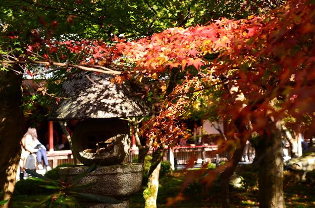紅葉とその影
