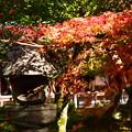 Photos: 紅葉とその影