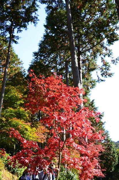 裏山の紅葉