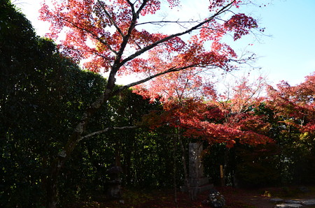 色づく金福寺