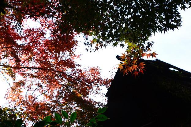 芭蕉庵と紅葉
