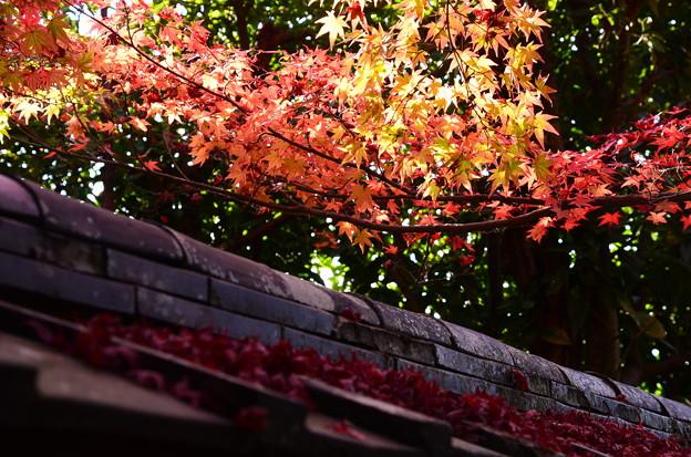 門の上の紅葉