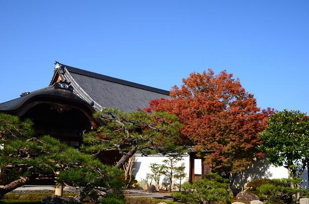 秋空の妙覚寺