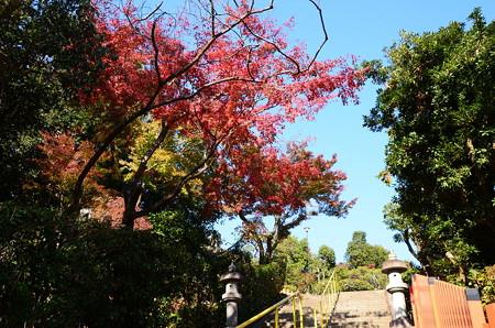 参道を彩る紅葉