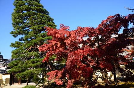 入り口脇の紅葉と松